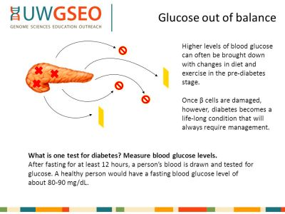 Glucose in balance Lesson Four Today we will… - ppt video ...