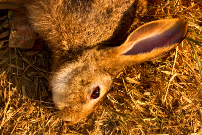Rabbit Hunting Tips: How to Hunt Rabbits (Expert Advices)