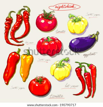 Vegetable illustration Stock Photos, Images, & Pictures ...
