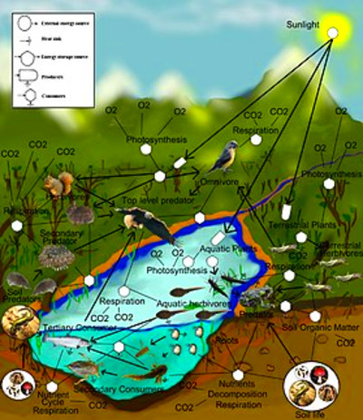 freshwater aquatic and terrestrial food web
