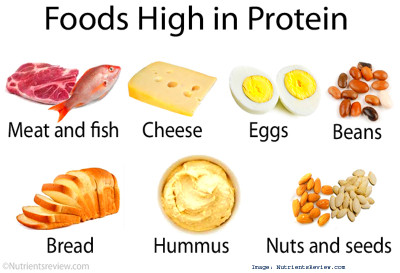 Fact: Our body needs adequate amounts of protein to repair damaged ...