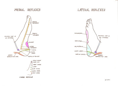 Reflexology Maps « Amanda Wilson Therapy – Brighton and Hove