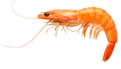 Some research suggests that there is not enough shrimp allergen in ...