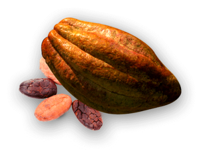 Cacao Production - Costarican Cocoa