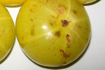Garcinia cambogia fruits