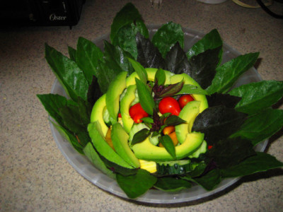 Diabetes Living Providing Natural Solutions for Improved health