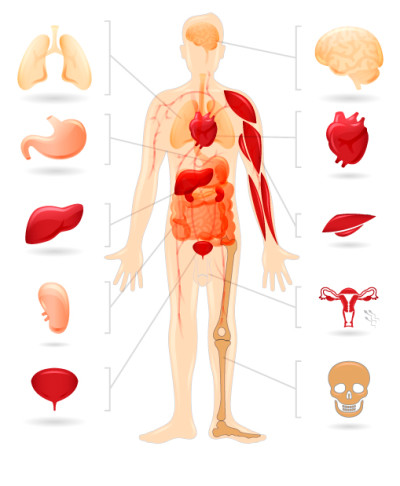 Human body diabetis | Diabetes Inc.