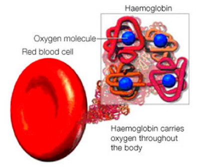 Difference between Blood and Haemoglobin