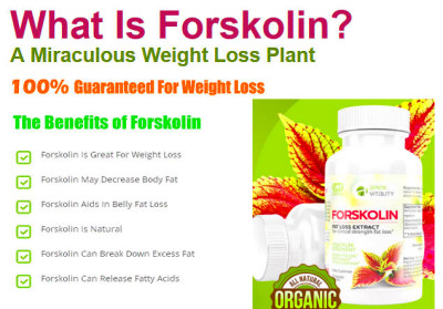 Forskolin Side Effects: Forskolin Weight Loss & Quick Belly Fat Burner ...
