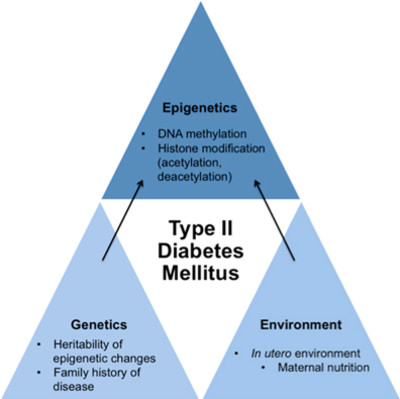 Frontiers | Epigenetics and type II diabetes mellitus: underlying ...