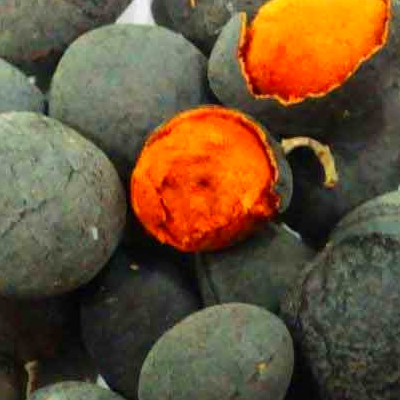 Velvet Tamarind fruit| Nutrition facts-Velvet Tamarind ...