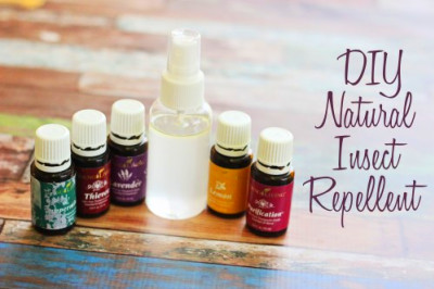 Homemade Natural Bug Repellent Recipes - Going EverGreen