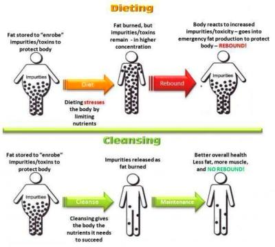 How a Nutritional Body Detox Helps Promote Healthy Weight ...