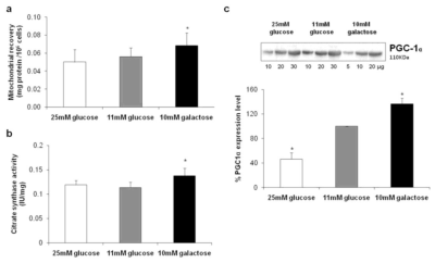 IJMS | Free Full-Text | Glucose-Modulated Mitochondria Adaptation in ...