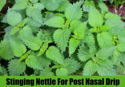 6 Effective Herbal Remedies For Post Nasal Drip – Natural ...