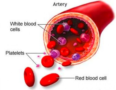 Causes of Low Red Blood Cell, White Blood Cell & Platelet | New Health Advisor