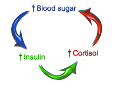 ... blood sugar increases insulin. Insulin causes an increase cortisol and
