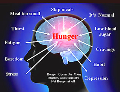 Many Causes of Hunger Some Real others Misinterpreted Brain Signals