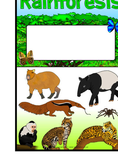 Rainforests/Amazon Rainforest Editable Topic Book Covers ...