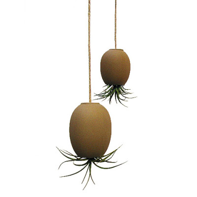 Air Plant Pod - The Green Head
