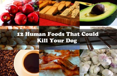 12 Human Foods That Could Kill Your Dog - The Waggington Post