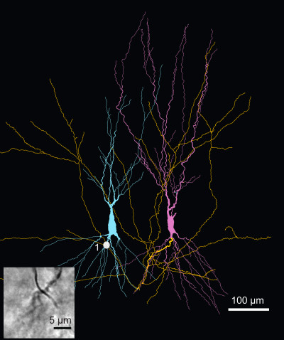 Synaptic connectivity motifs contribute to memory storage ...