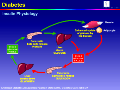 ... New Liver Protein that Increases the Number of Insulin-Making Cells