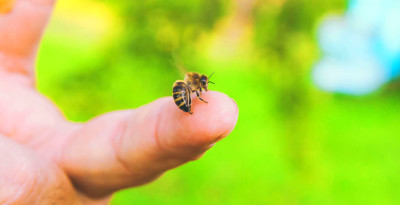 Bee Sting Treatment + A Quick Natural Home Remedy - Dr. Axe