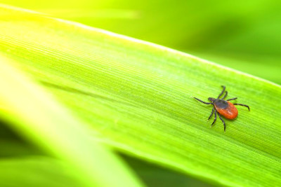 Lyme Disease: Prevention, Symptoms, and Treatment