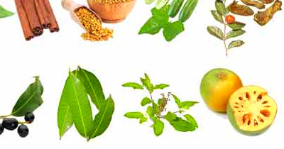 12 Diabetes Herbs to Control Blood Sugar | Diabetes Herbal ...