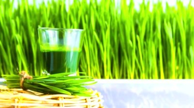 Incredible Wheatgrass Benefits: Is it Really Worth the Hype? - NDTV Food