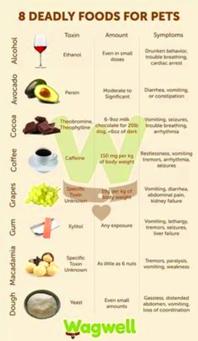 Helpful list of foods that dogs can/can't eat :)   It's a ...