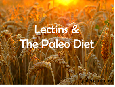 Lectins & The Paleo Diet | Everything Paleo! | Pinterest ...