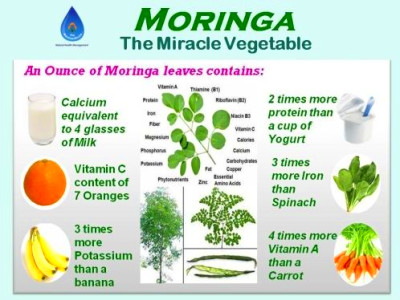 Miracle Tree | Power Food - Moringa Oil, Nutrition ...