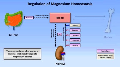 ... and dietary supplements: Biochemistry Tips (5): magnesium & calcium