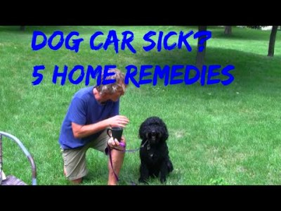 Car Sickness in Dogs: 5 Home Remedies - YouTube
