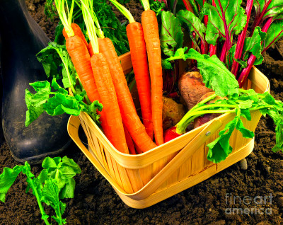 Fresh Picked Healthy Garden Vegetables Photograph by ...