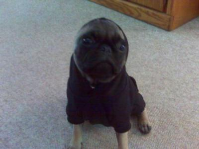 Basic Dog Hoodie - Jet Black with Same Day Shipping ...