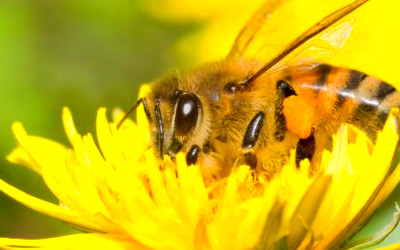 List of Foods We Will Lose if We Don't Save the Bees