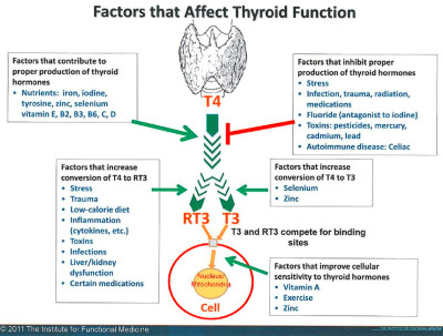 Thyroid Health and Hypothyroid (part 2) - Paula Owens, MS