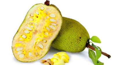 Is jack fruit good for diabetic people? - Quora