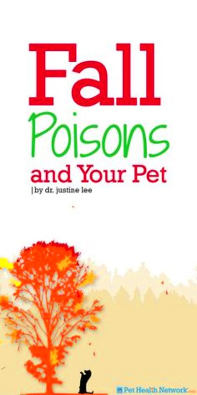 fall # poisons and your # pet by dr justine lee more lee ...