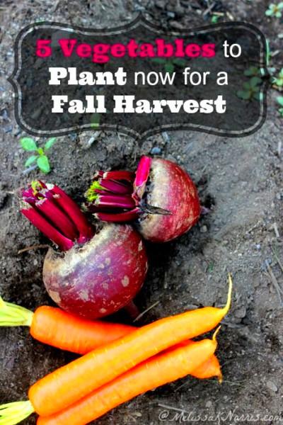 List of vegetables, Fall harvest and Vegetables on Pinterest