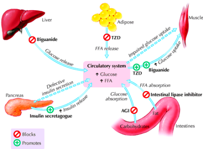 mechanisms of diabetes drugs | Diabetes | Pinterest | Diabetes