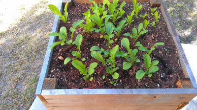 Don't throw out your expired vegetable seeds!   What's ...