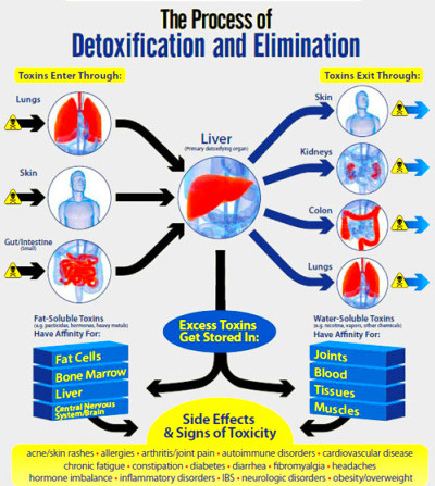 Liver Detox Review | Complete Guide To Detoxing Your Liver