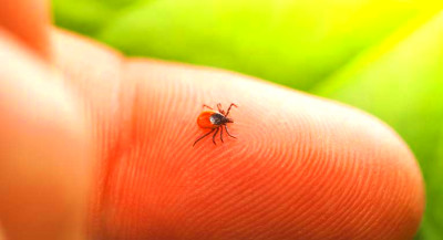 Lyme Disease Prevention: 48 Hours After Tick Bite
