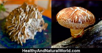 Discover the Magical Mushrooms That Fight Cancer, Heart Disease, Diabetes and More