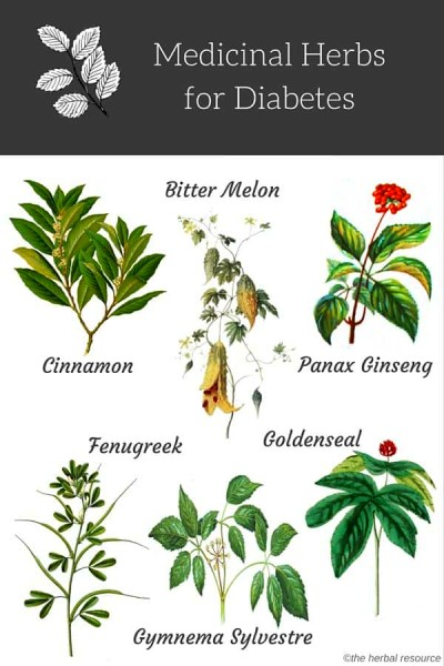 Herbs for Diabetes Treatment and Relief - Uses and Benefits