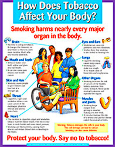 How Does Tobacco Affect Your Body? (Display Poster)-journeyworks.com